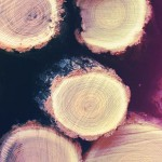 Accelerating Lumber Production with Machine Vision