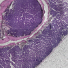 Faster, better, stronger: the power of automated 3D histopathology