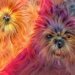 The Dogs of Image Recognition