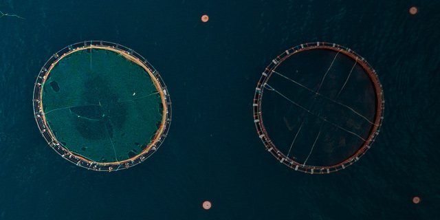 How Aquaculture is Using Fish Imaging to Face Today's Global Food Challenges