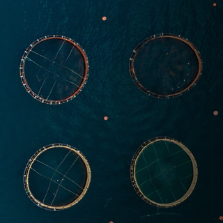 One Smolt, Two Smolt, Three Smolt: How Aquaculture is Using Fish Imaging to Face Today's Global Food Challenges